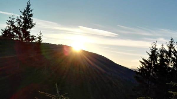L'Alba nel bosco, lo spettacolo della natura che si risveglia