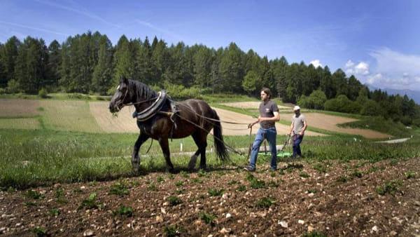 Cavalli, zappe e mangiar di malga