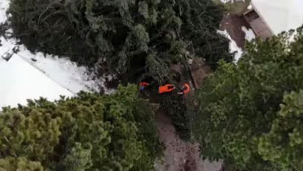 Il viaggio dell'Albero di Natale donato da Moena a Firenze