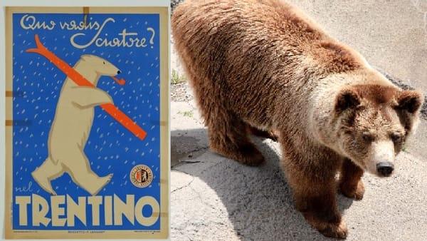 Cultura, una mostra gratuita racconta il rapporto tra uomo e orso