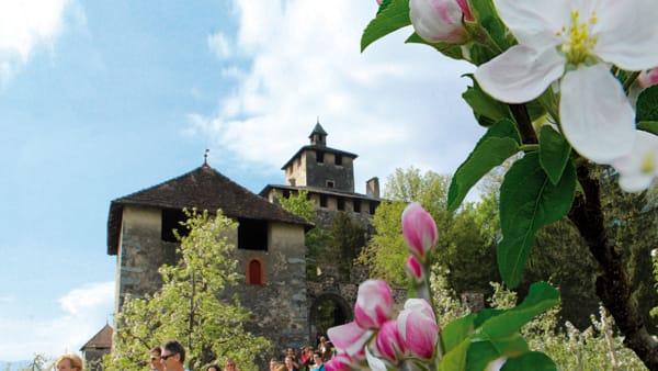 """A passeggio tra i meleti: torna """"Quattro ville in fiore"""""""