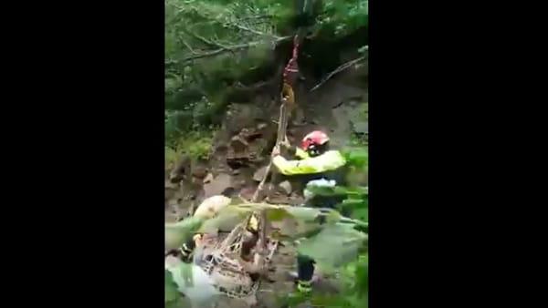 Mucca recuperata con l'elicottero al Passo Cereda