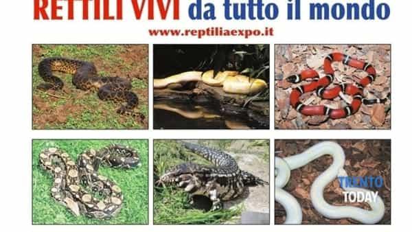 Reptilia Expo - l'affascinante mondo dei rettili a Caldonazzo