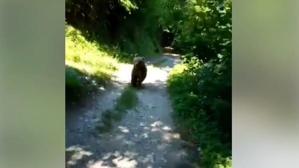 Orso segue escursionista: il video è incredibile