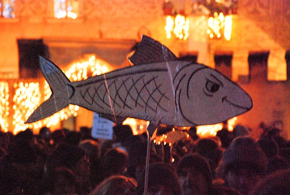 sardine-2